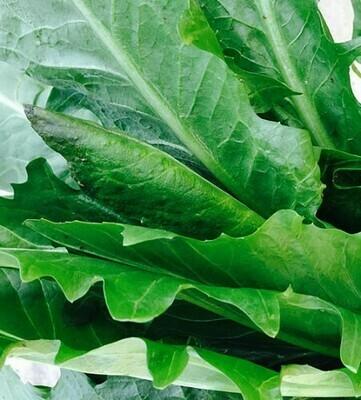 Cicoria (500g)