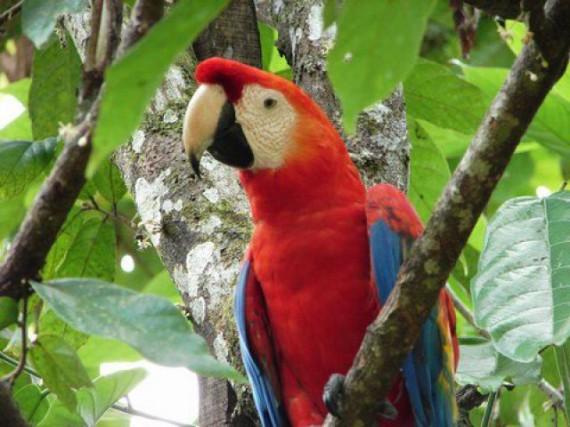 forêt amazonienne au Pérou