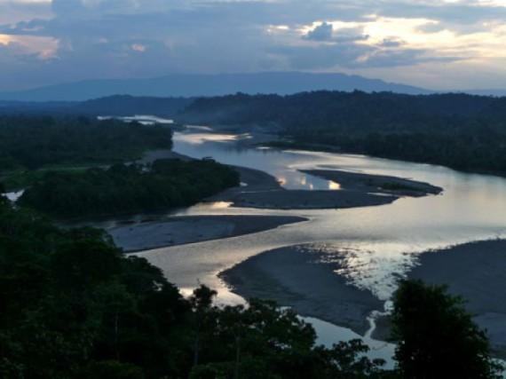 forêt amazonienne au Brésil