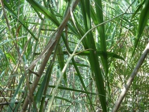 Urwald in den Yungas