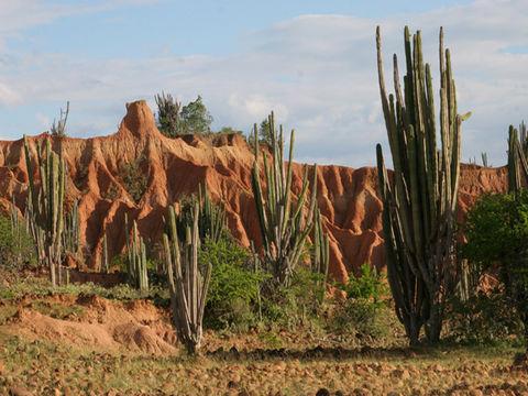 Die Tatacoa-Wüste