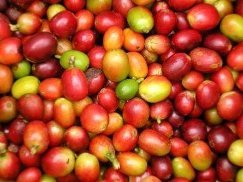 Kaffee_Manizales