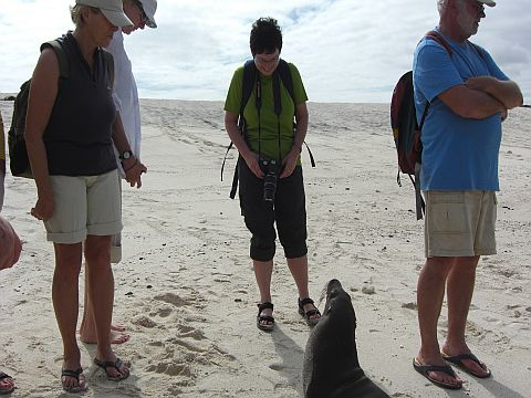 Gruppe mit Seelöwe