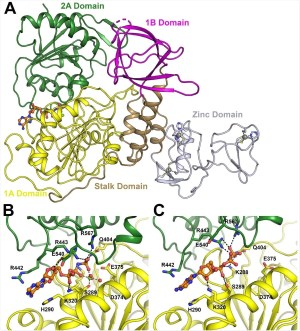 Identifying targets that can be treated on the essential SARS-CoV-2 protein