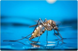 The effect of climate change on malaria