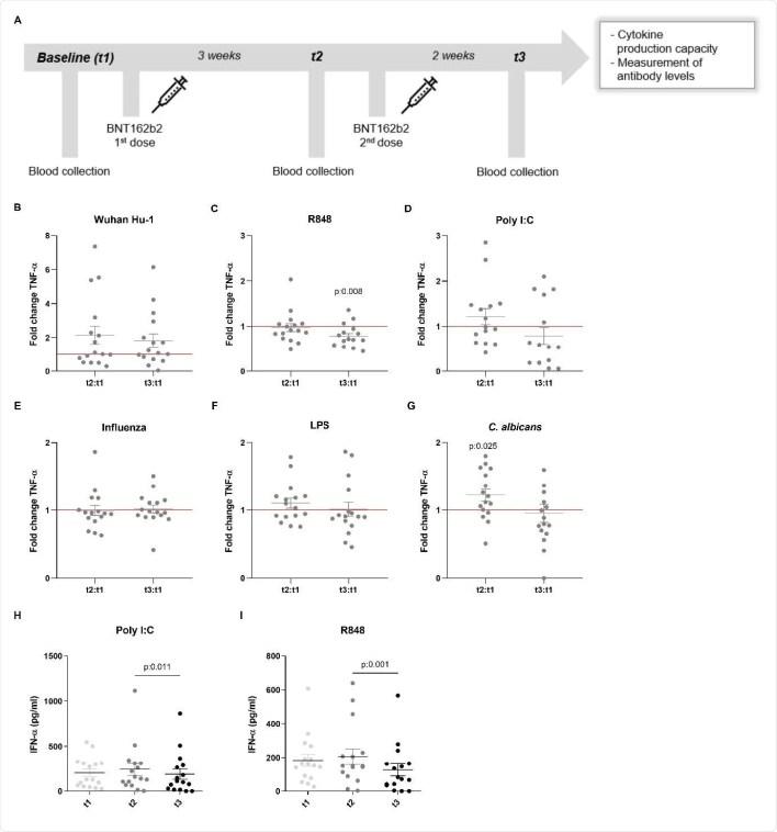 Продукция TNF-α и IFN-α в ответ на гетерологичные стимулы в PBMC, выделенных от вакцинированных субъектов.  (A) Описание исследования: дни вакцинации и сбора крови.  (BG) Значения кратности изменения продукции TNF-α рассчитываются индивидуально для каждого субъекта путем деления t2: t1 и t3: t1.  Данные представлены в виде кратных изменений ± стандартная ошибка среднего (n = 15-16) и проанализированы с помощью критерия Уилкоксона для согласованных пар со знаком рангового ранга, сравнивающего каждое отношение с