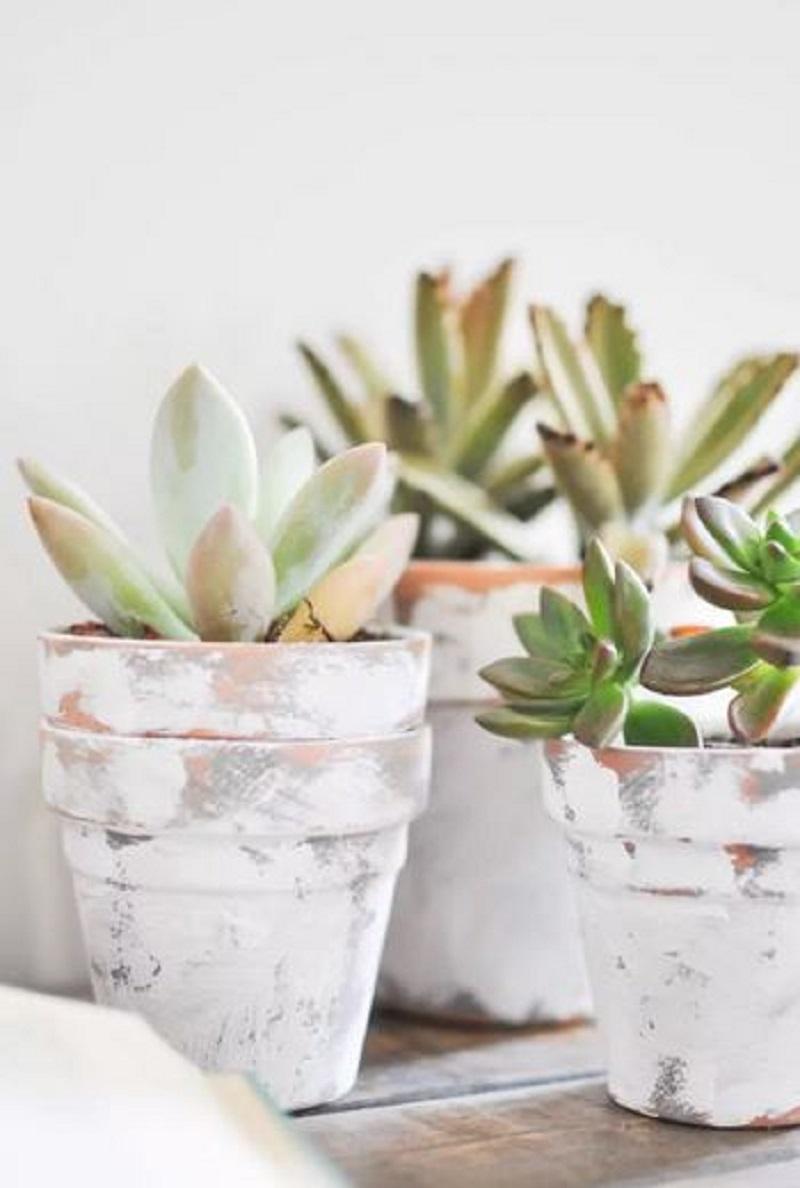 Rustic feel flowers pots