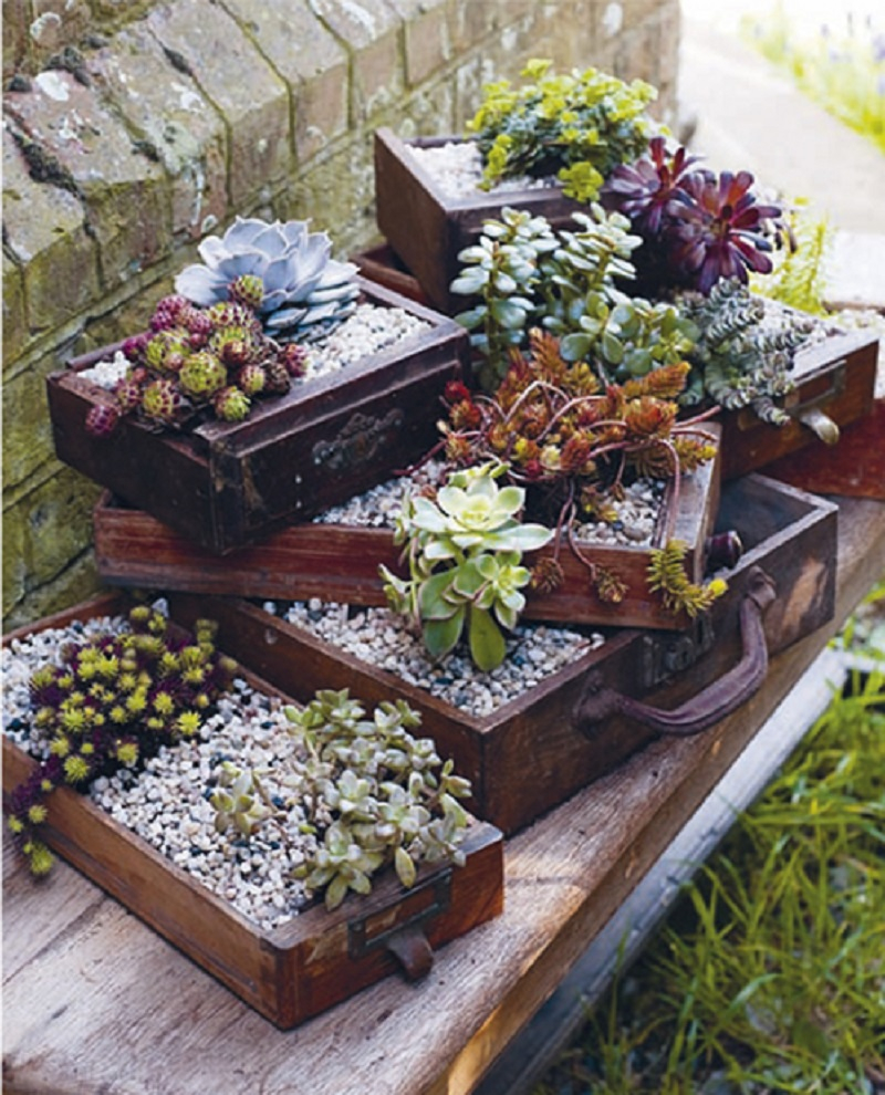 Use drawer planters