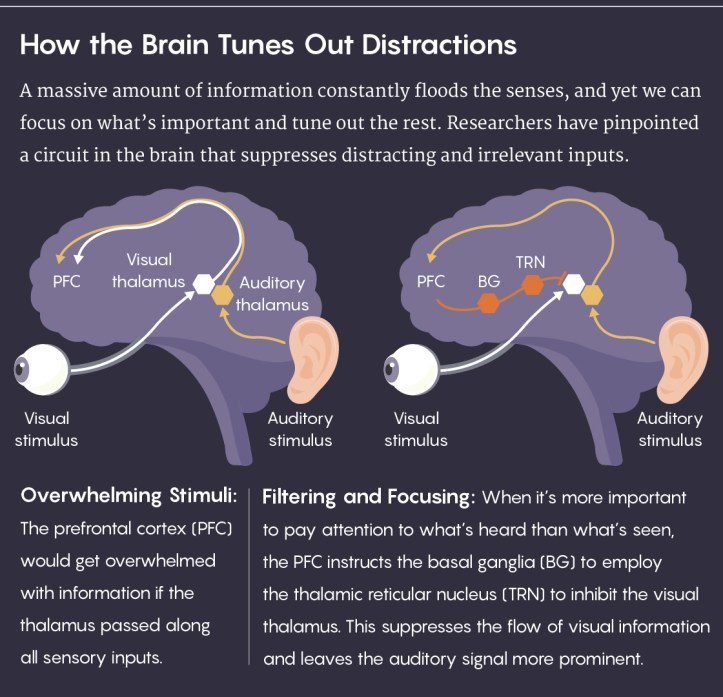 GRAPHIC: How the Brain Tunes Out Distractions