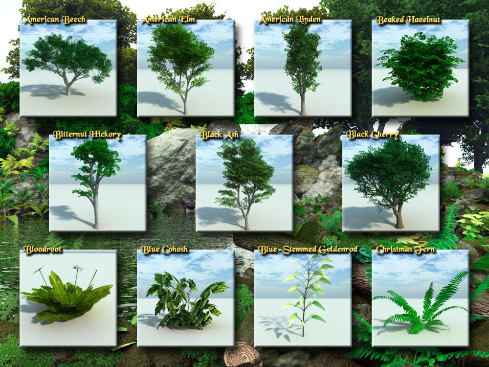 نباتات تعيش في الغابه بالصور