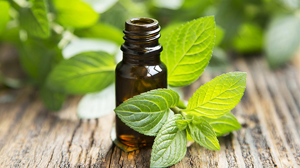 Kết quả hình ảnh cho Peppermint Essential Oil