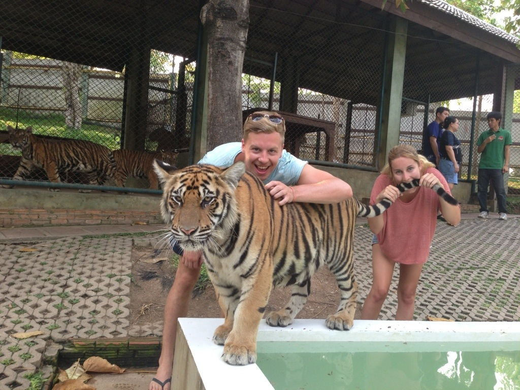 Visiting the Tigers in Thailand