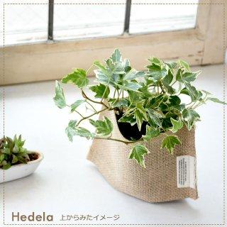 風水 トイレ 観葉 植物 | 観葉植物は風水的におすすめ!トイレ ...