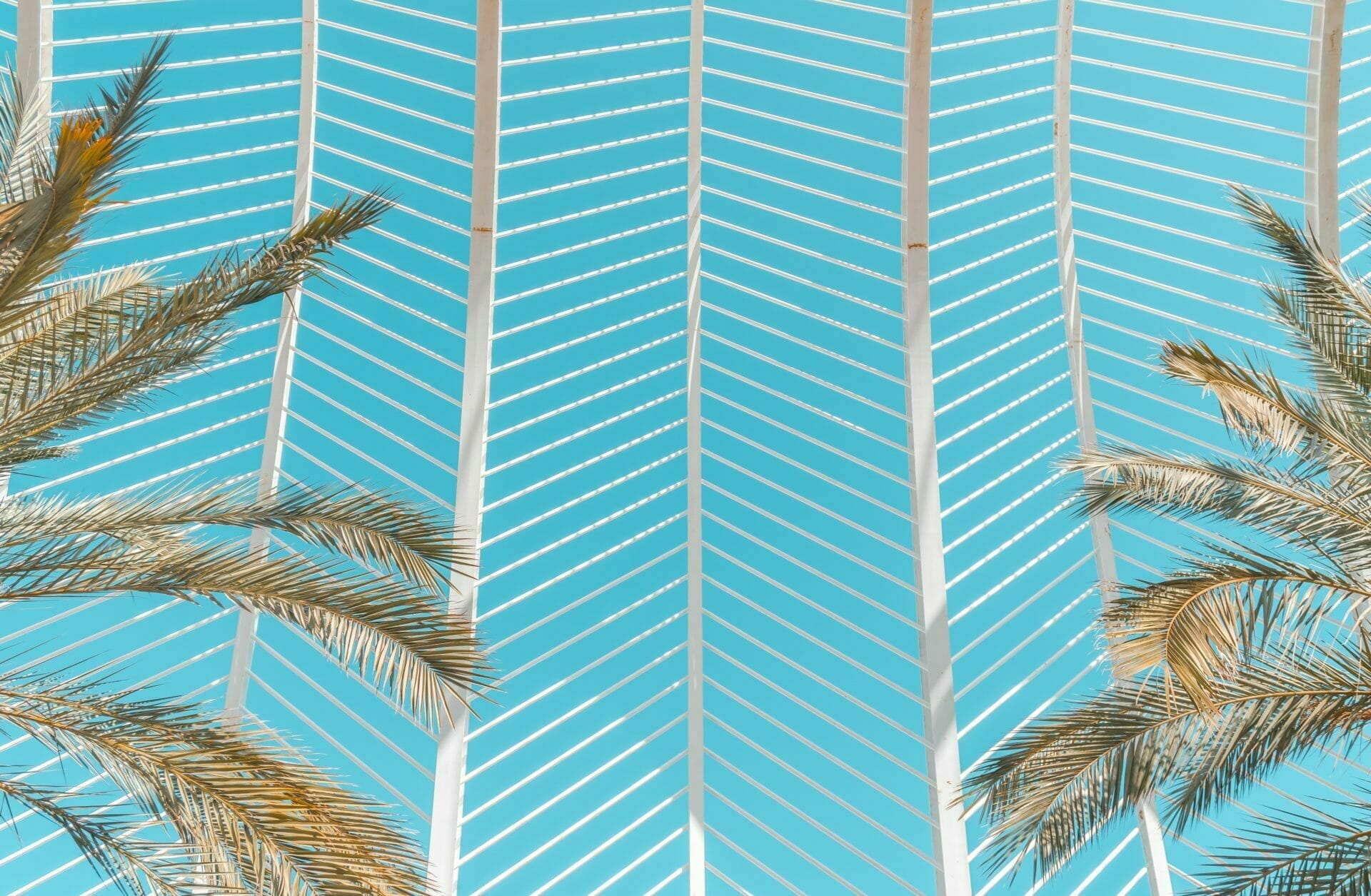 Picture of Palm Trees for Real Wealth Show Podcast Episode #627