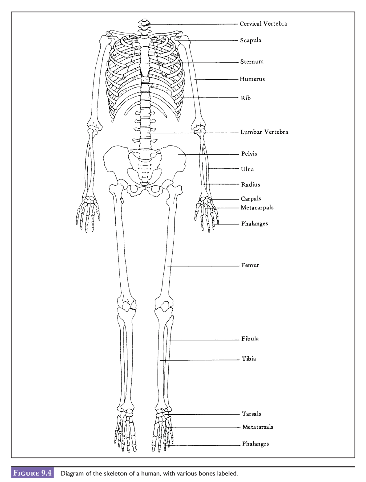 34 Label The Carpals And Tarsals