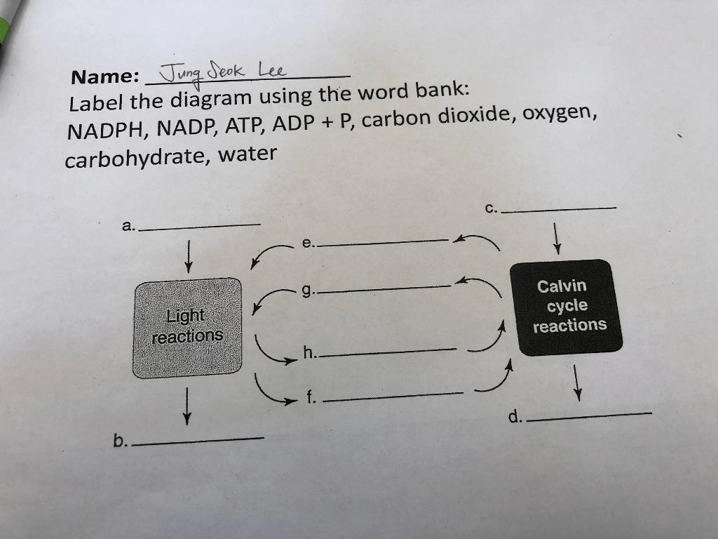 Solved Name Deek Leu Label The Diagram Using The Word Ba