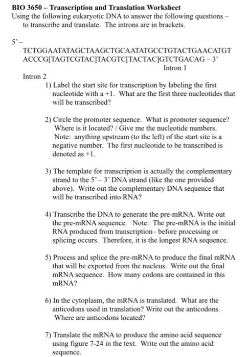Solved Bio 3650 Transcription And Translation Worksheet
