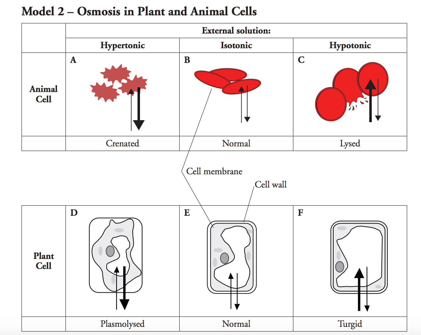 Solved 11 Using Your Knowledge Of Cells Which Type Of C