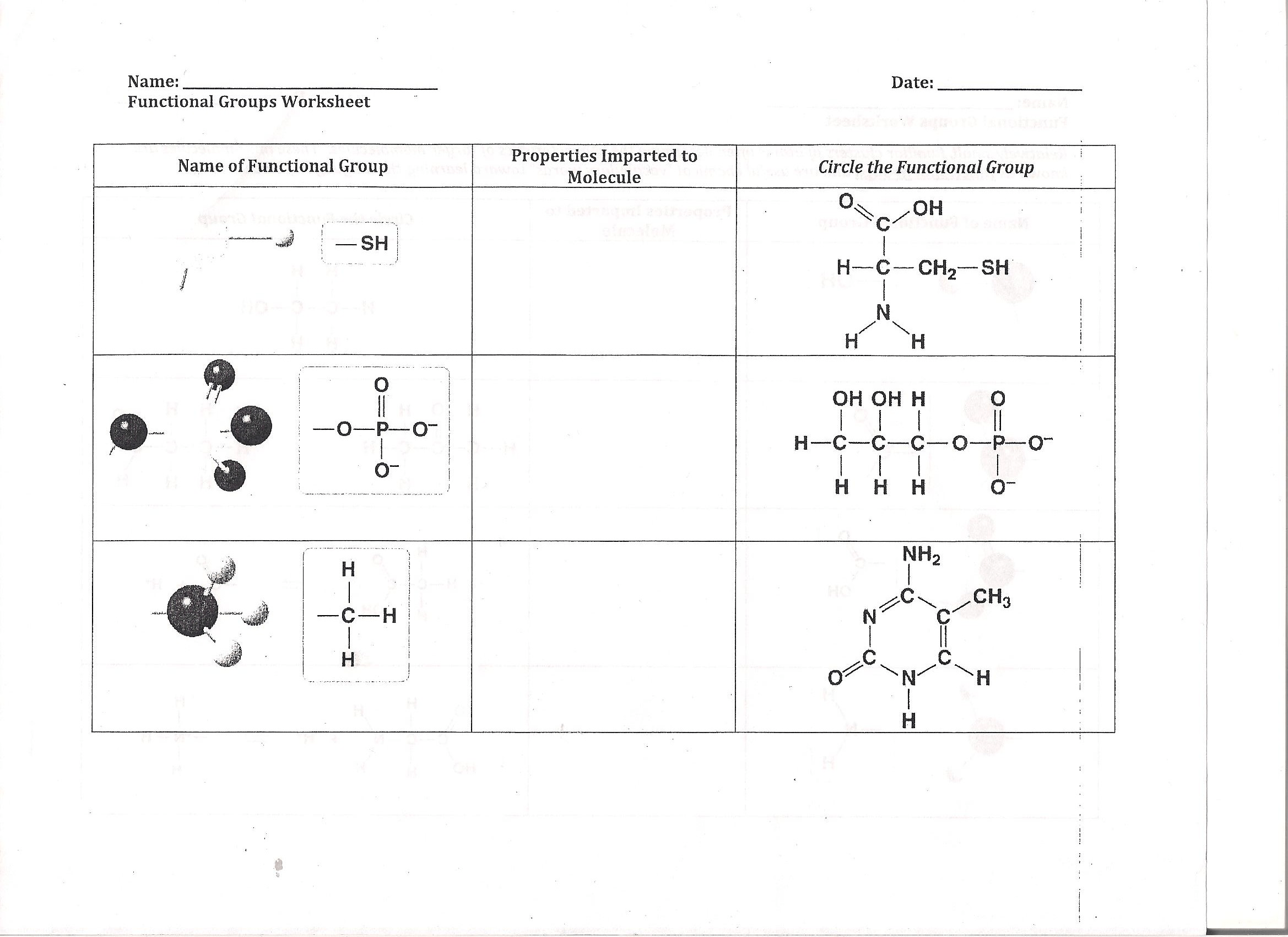Solved Name Functional Groups Worksheet Name Of Function