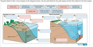 Solved: Zones In Lakes And Oceans Are Delineated By Depth