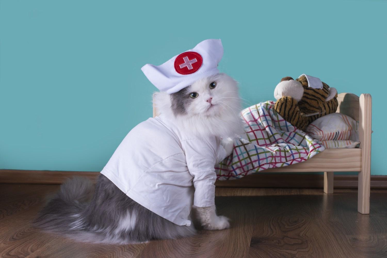 Should You Buy Pet Insurance