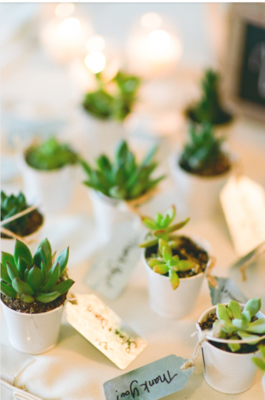 Succulent wedding favours make great decorative accents for homes or office desks/ Photo: Tamara Gruner Photography