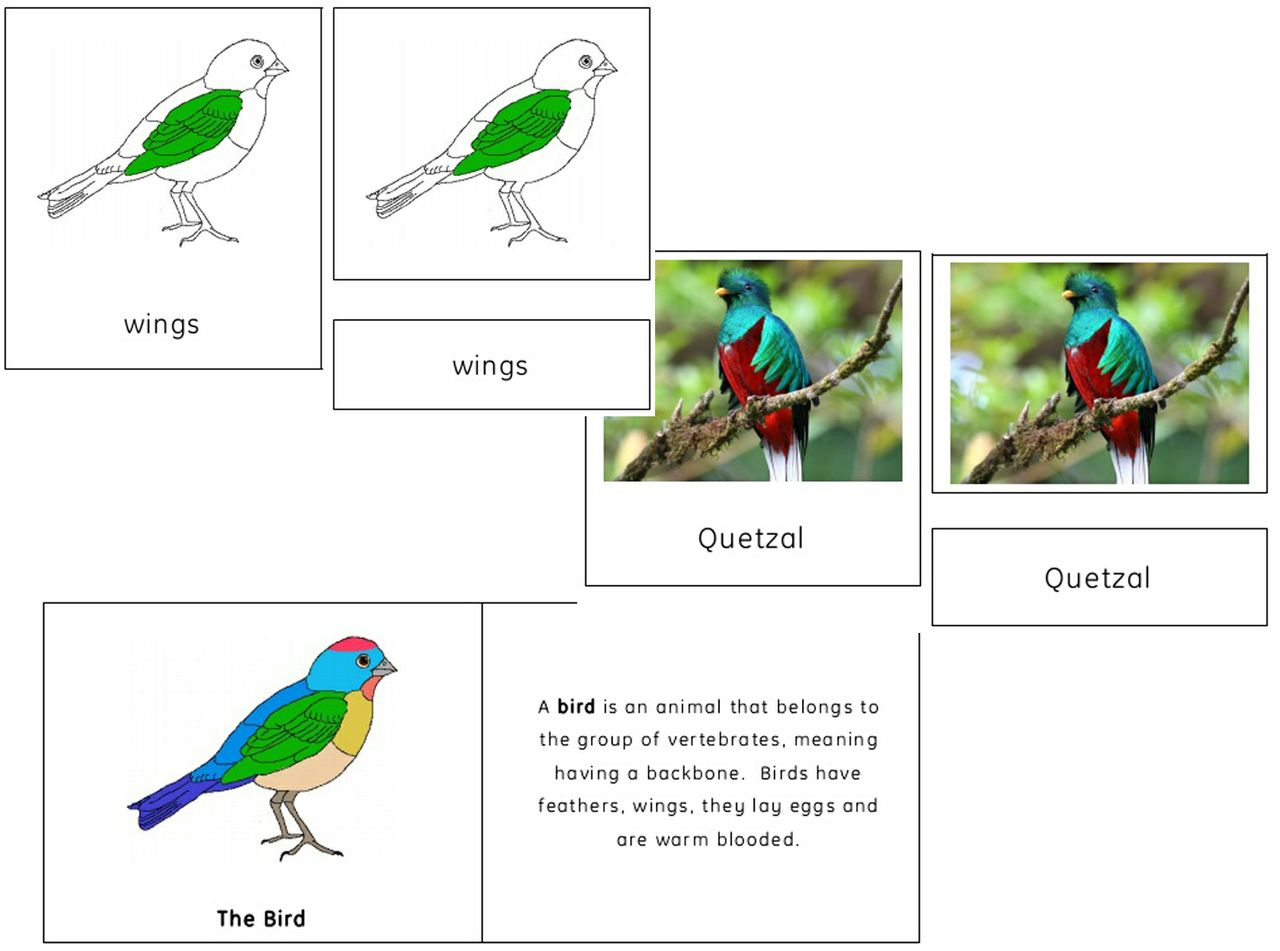 Dinosaur Cards And Worksheet Free Printable