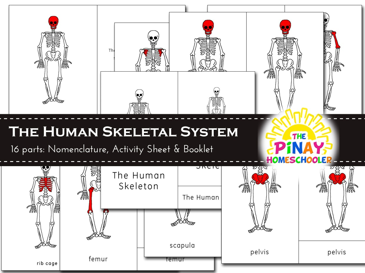 The Human Skeleton Pinay Homeschooler Shop