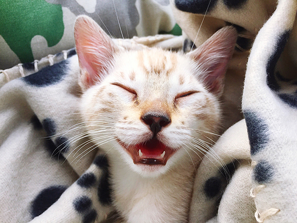 5 Tips for Keeping Your Cat Happy and Healthy