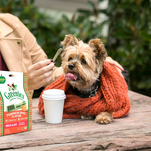 3026f753 Autumn Activities for You and Your Dog > What Grandma Teaches Me