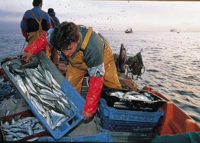 Resultado de imagen para caleta de pescadores