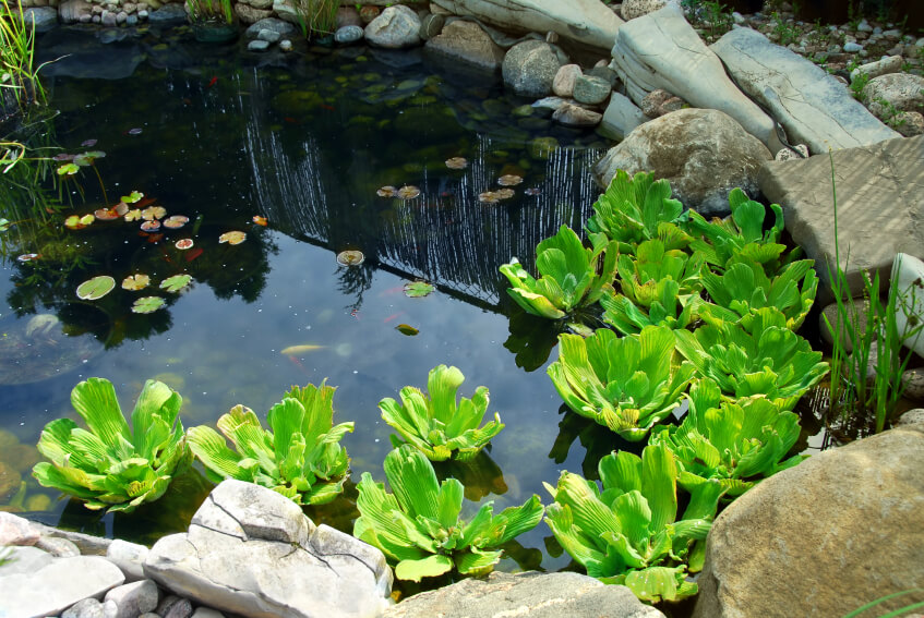 Koi Pond Rock Design