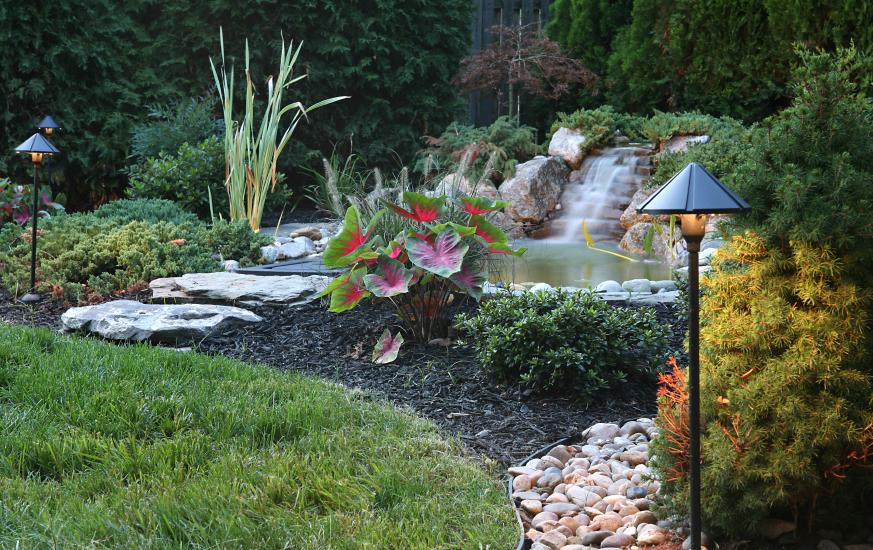 Aquatic Plants Outdoor Ponds