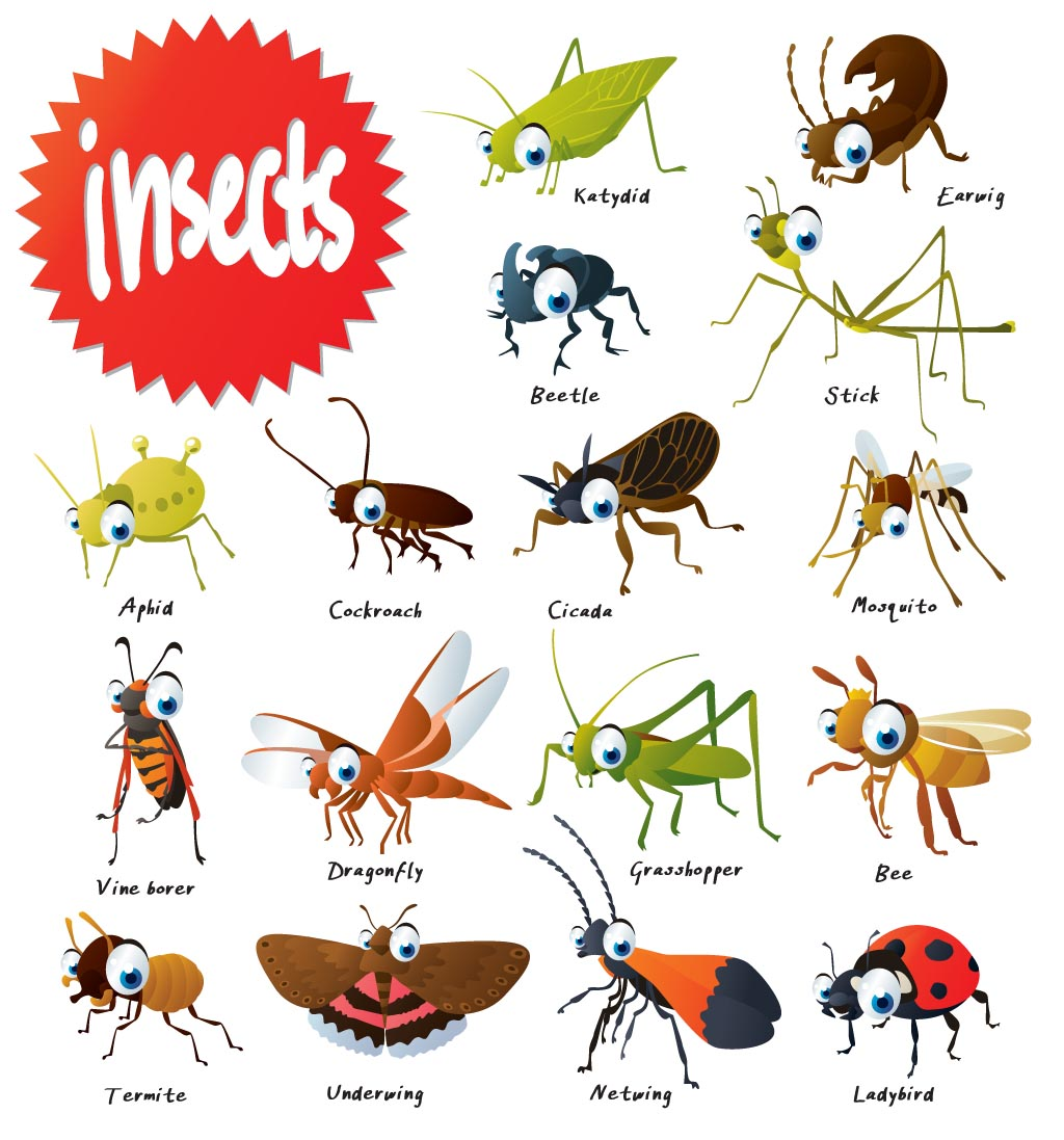 The Wonderful World Of Insects Pitara Kids Network