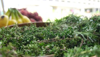 best herbs for strong bones