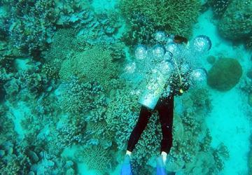 ilustrasi wisata scuba diving