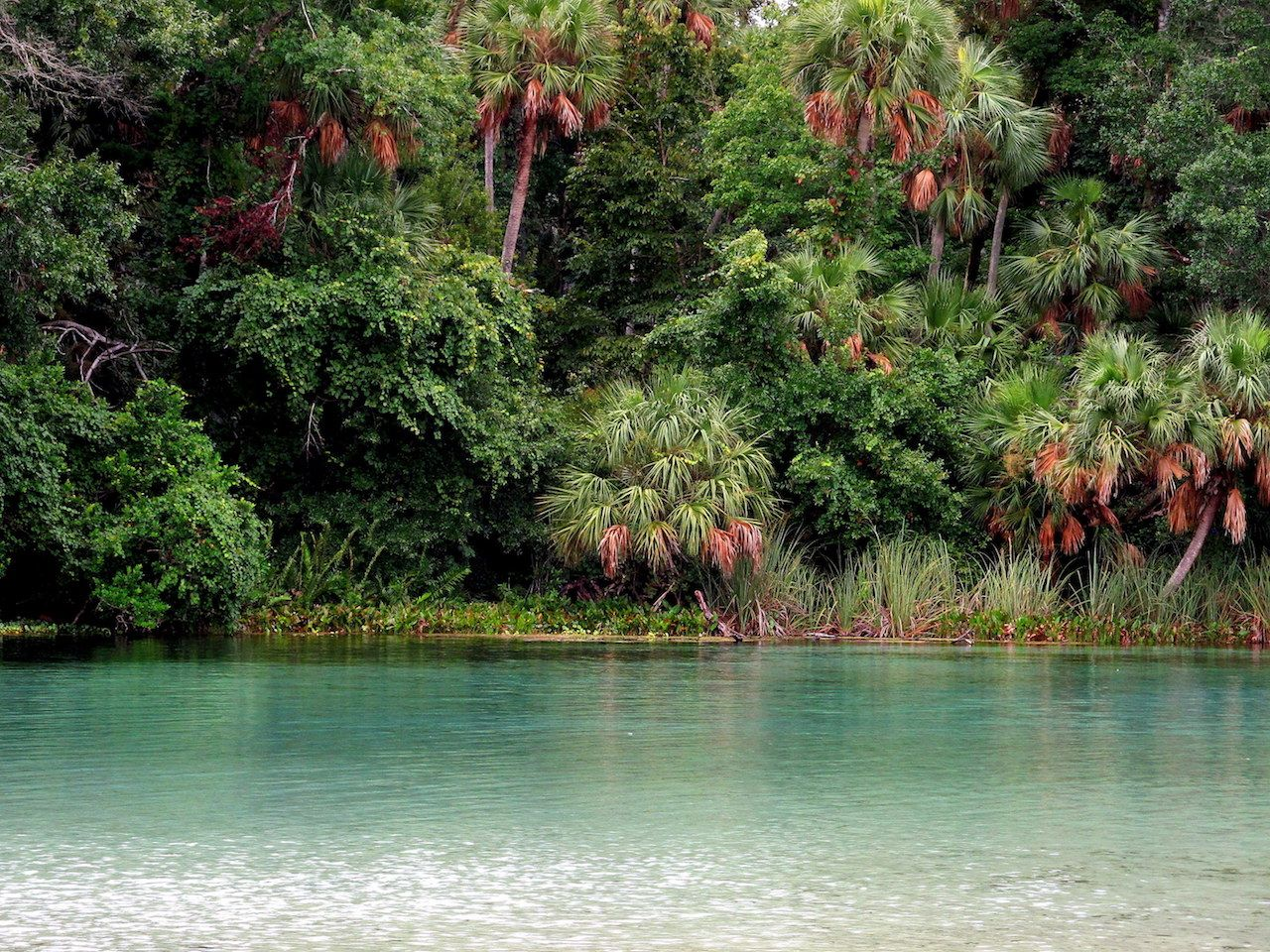 How To Hike The Florida National Scenic Trail