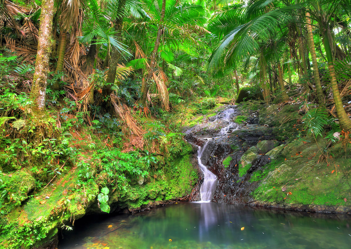 Best Tours Hikes And Other Experiences In The Caribbean