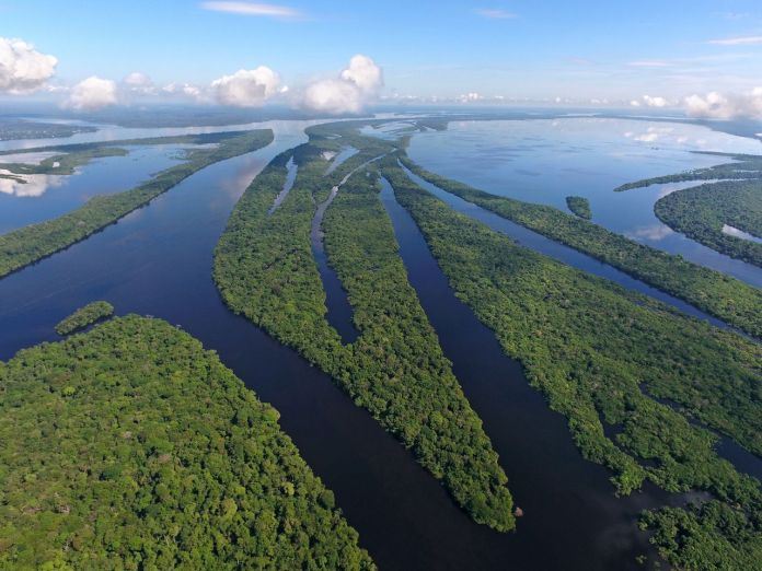 Anavilhanas Archipelago, amazonia forest flooded in Negro River,