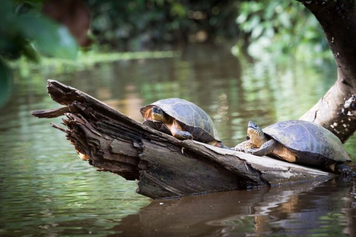 Costa Rica, Tortuguero National Park, canals and rainforest
