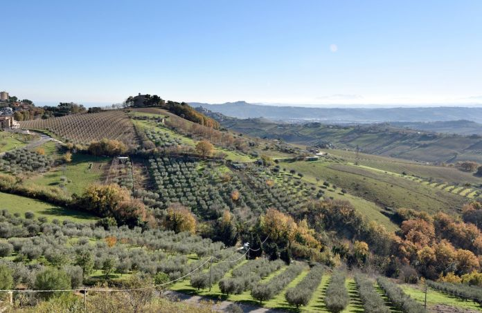 Hills in Marche Region with grapes and agricultural fields