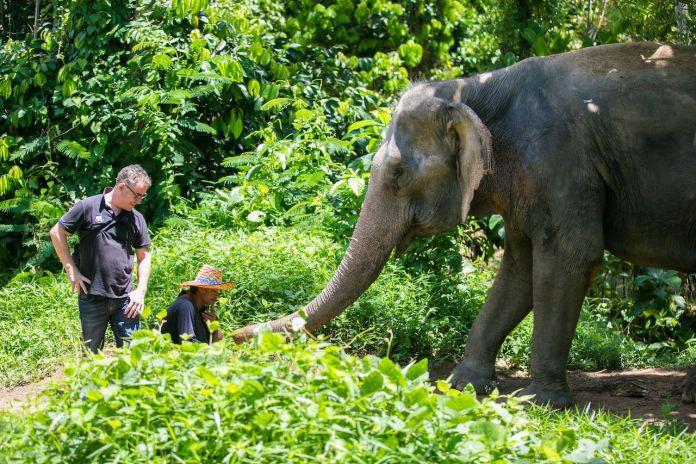 Staff and tourists with elephants at the Phuket Elephant Sanctuary