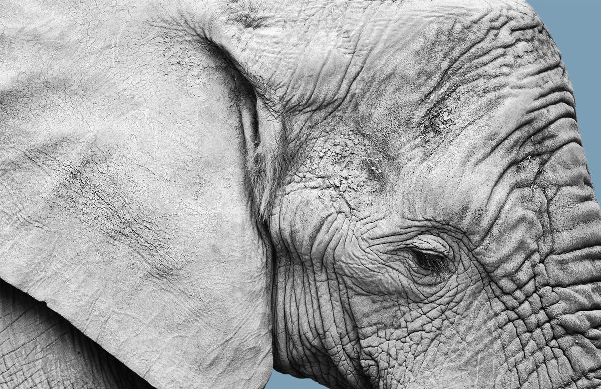 The science behind wrinkles!