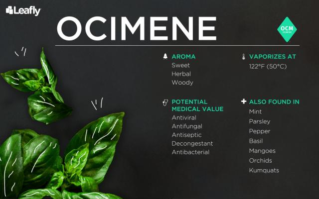 weed terpene ocimene