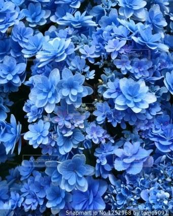 「青い花の映像」の画像検索結果