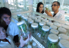 jobs after Msc Biotechnology
