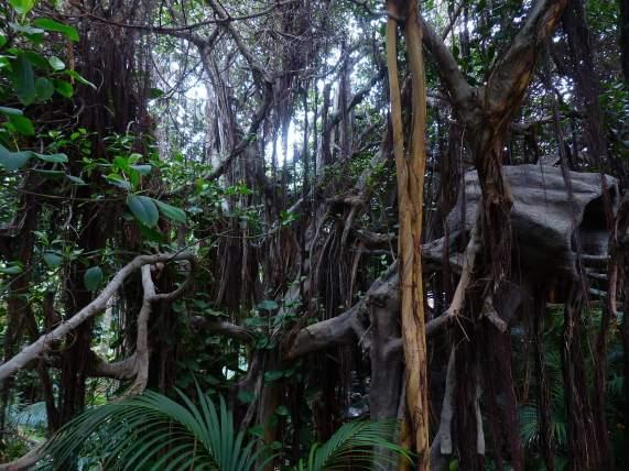 jungle-406780_1920