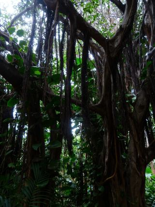jungle-406781_1920
