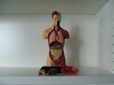 Human Anatomy Doll | Collectors Weekly