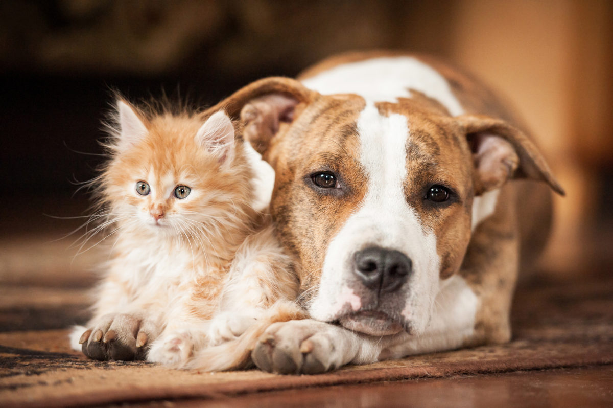 Which Are Smarter Cats Or Dogs We Asked A Scientist Pbs Newshour